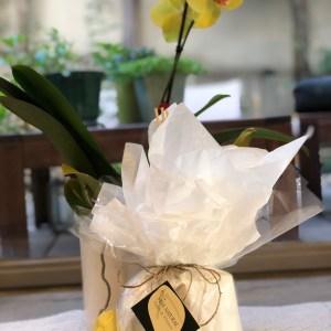 מארז מתנה לבישום הבית Apple & Flowers