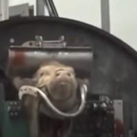 Robert Brzoza: Ubój Rytualny !! UWAGA: VIDEO +18 {Autor Gabi}