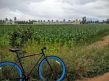 cycling-whitefield-bangalore-11