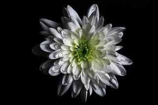 flower-1011420_640.jpg