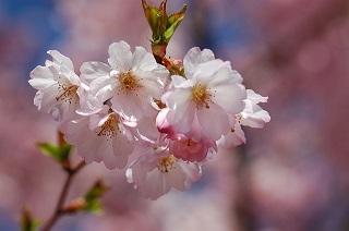 spring-1191637_640.jpg