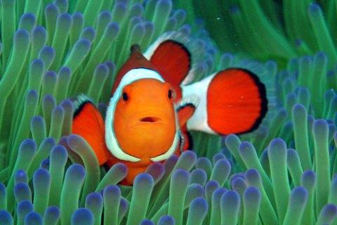 海水魚の飼い方|初心者が知っておくべき5つの注意点