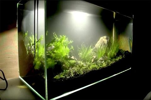 水槽レイアウトレシピ11|60㎝水槽で石組水草水槽をつくる
