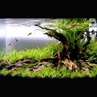 水槽レイアウトレシピ10|流木と石で水草水槽をつくる