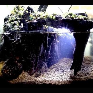Youtuberに学ぶ!地底湖水槽レイアウトのアクアテラリウム立ち上げ!