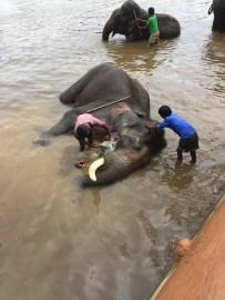Elephant baths!