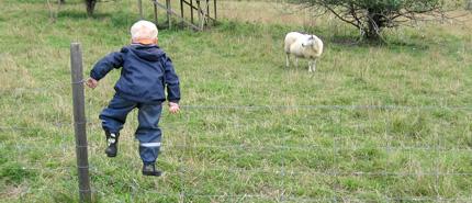 Pojke i fårhage, Foto: Håkan Stenström