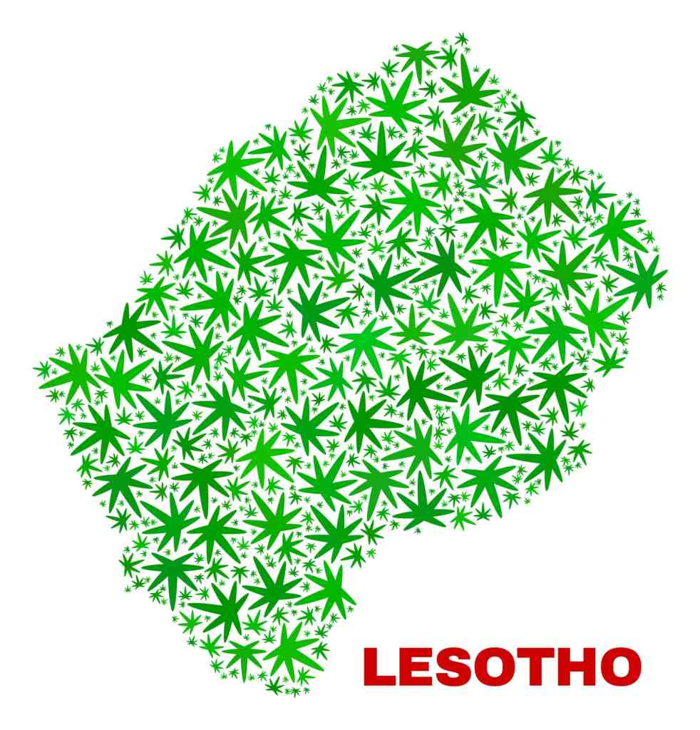 Lesotho cannabis