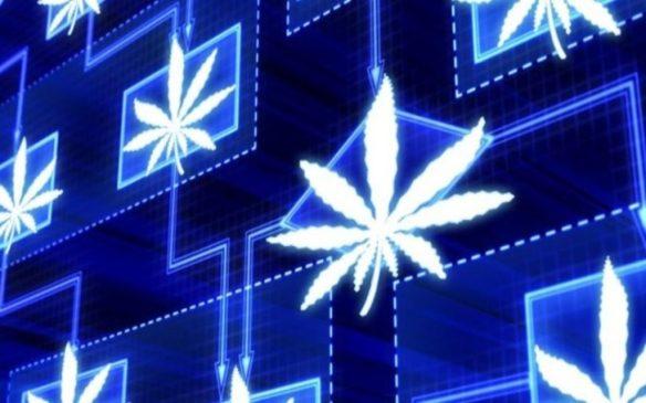 BLOK Technologies is Canada's Foremost Cannabis – Blockchain Developer