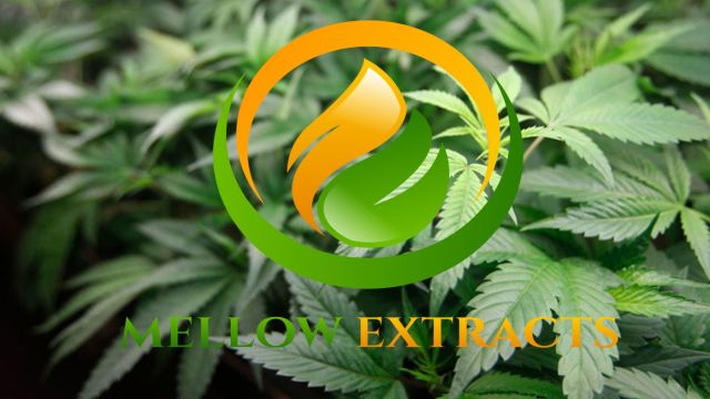 Mellow Cannabis Extracts