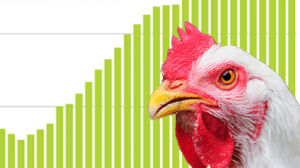 A chicken and a chart