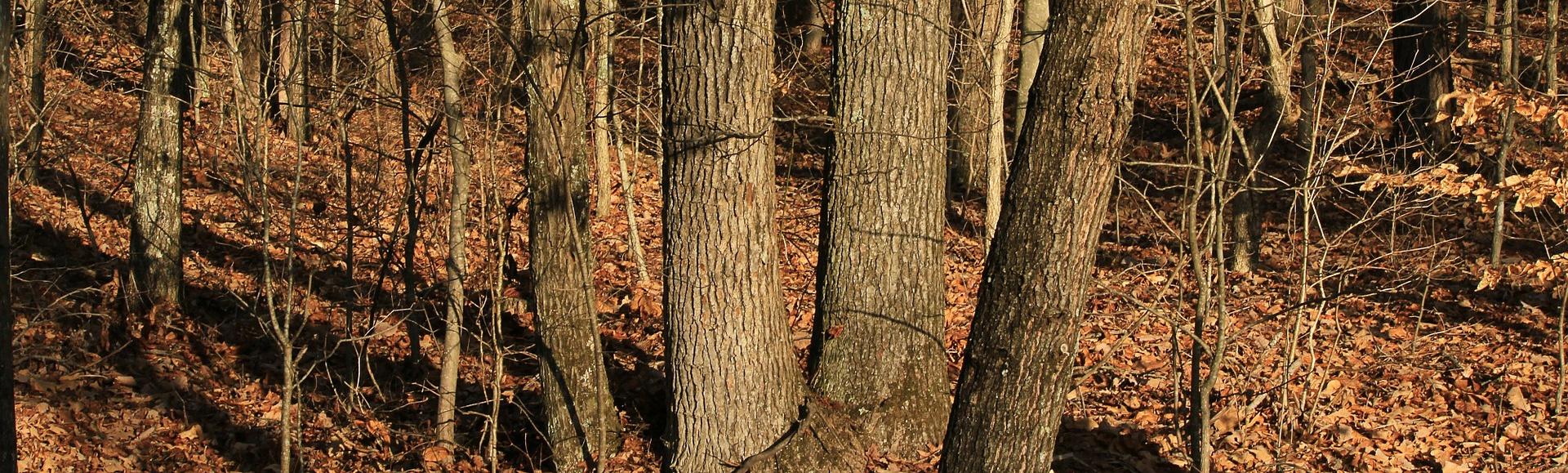 Atelier biodiversité – Samedi 7 novembre 2020 – Nettoyage du bois l'Évêque
