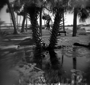 Twin Palms Holga