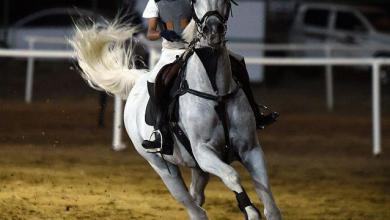 Photo of انطلاق بطولة الفروسية لقفز الحواجز بمحافظة أحد المسارحة