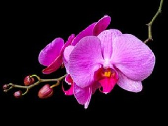 orchid-237480__180