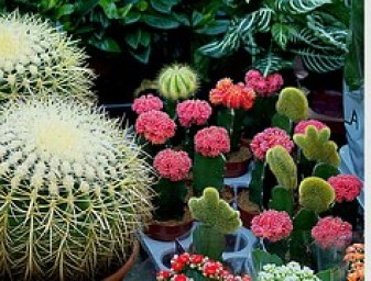 cacti-508488__180