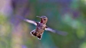 hummingbird-691483__180
