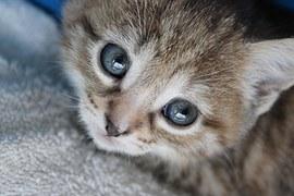 kitten-793652__180