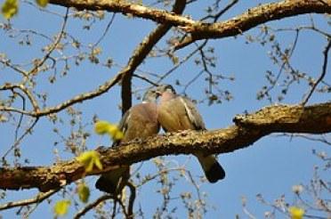 pigeons-50005__180