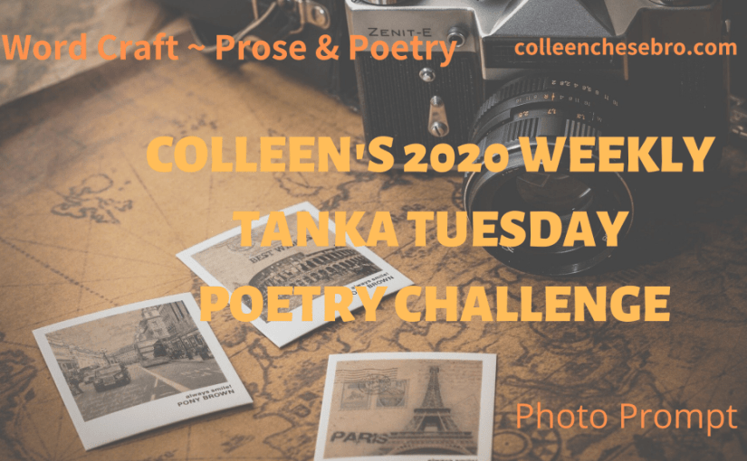 Colleen's 2020 Weekly #Tanka Tuesday #Poetry Challenge No. 174 #PhotoPrompt #Haiga #Haiku #Tree #Nature