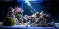 Reef update 15.03.2015