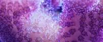 Stylophora pistillata coral