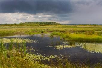 crex land summer green