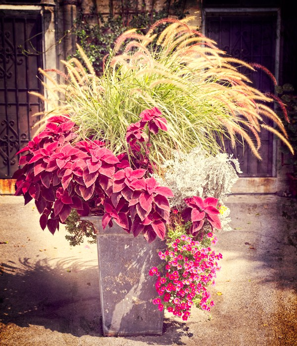 fall flowers grass potted plant in urban landscape 30 day photo challenge day 4