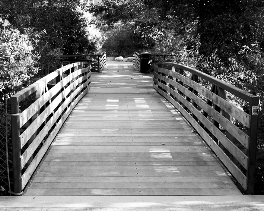 wooden bridge with foilage on both sides in black and white photography