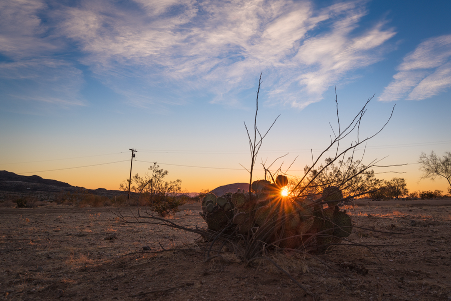 sunrise desert near Joshua Tree National Park