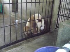 Brown Panda. He looks so sad :(