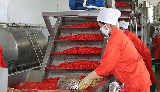Chinese wolfberry  industry