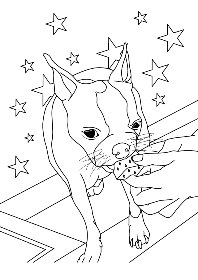 Boston Terrier Coloring Pages – FREE Printable Color Pages