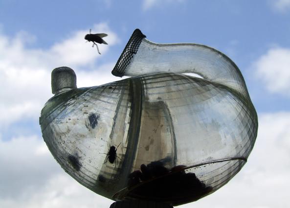 hatched_flies.jpg