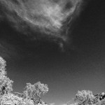 Red Centre Adventures in Black and White
