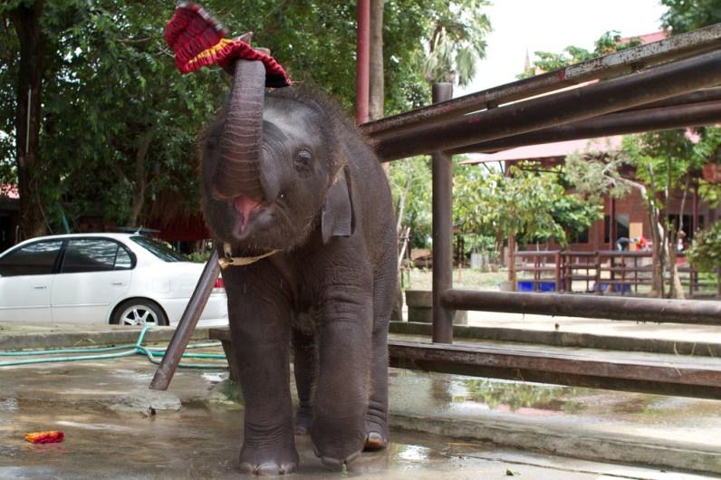 elefanten-kraal-ayuthaya-1