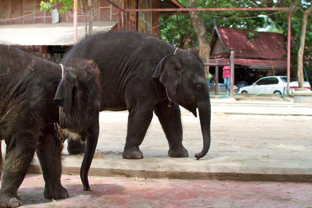 Elefanten-Kraal in Ayuthaya 22