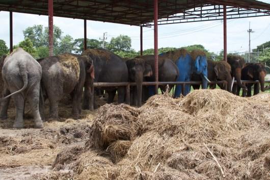 elefanten-kraal-ayuthaya-5