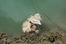 nukualofa-toter-hund