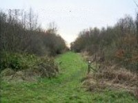 Little Linford Wood 2007