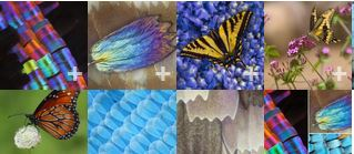 Macro photographs  of butterfly wings