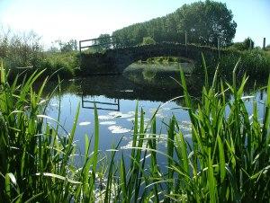 Olney Meadows