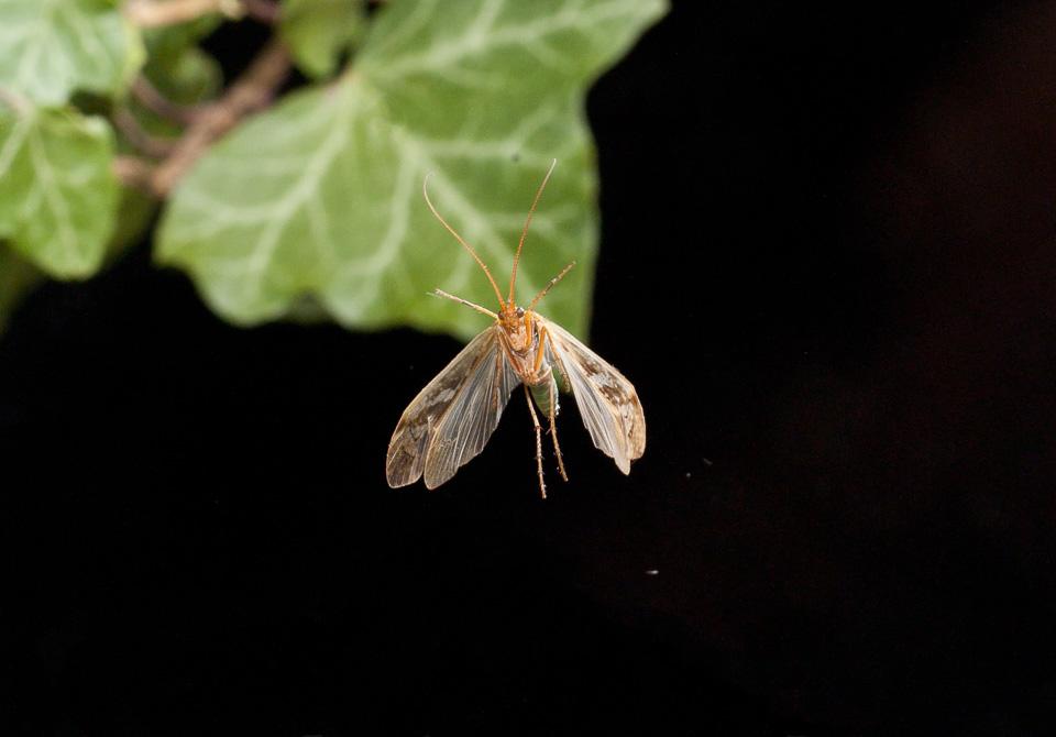 Caddisfly by Paul Lund