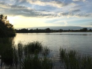 Walk, Willen Lake 4 July 2017