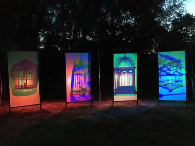 For the birds event ©Julie Lane, Linford Manor Park 22 July 2018