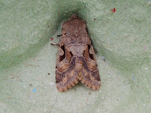 Hebrew Character © Gordon Redford, Goosey Bank near Olney, 19 March 2019