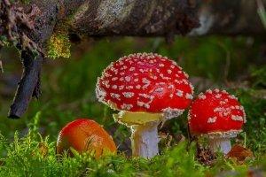 Mushroom Magic 5 Oct 2019