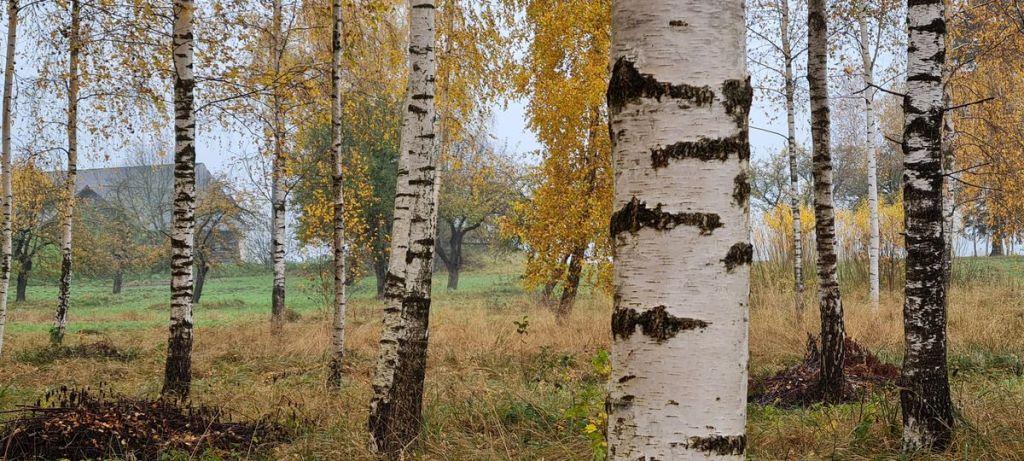 Meža kopšana