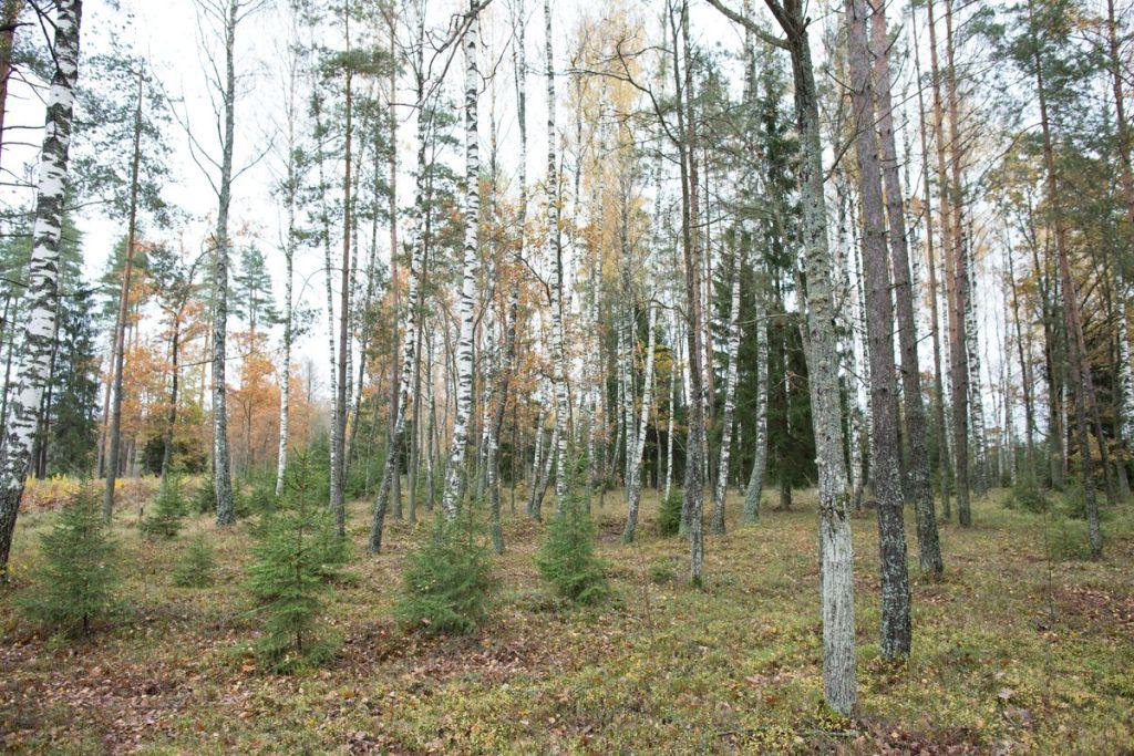 meža inventarizācija