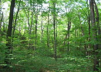 Planetoscope - Statistiques : Nombre d'arbres plantés en ...